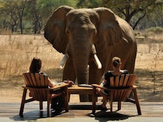 2 people at dinner looking at large elephant